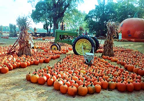 Giant selection of pumpkins, corn maze, wagon rides, and locally grown produce and more at Mark's Melon Patch near Albany Georgia