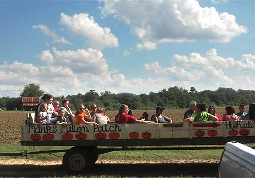 Wagon rides, corn maze, pumpkins and more, for great field trips and Educational School Tours at Mark's Melon Patch, melons, family fun, and locally grown produce near Albany Georgia